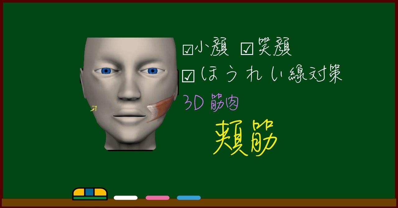 頬筋【3D筋肉・解剖学】