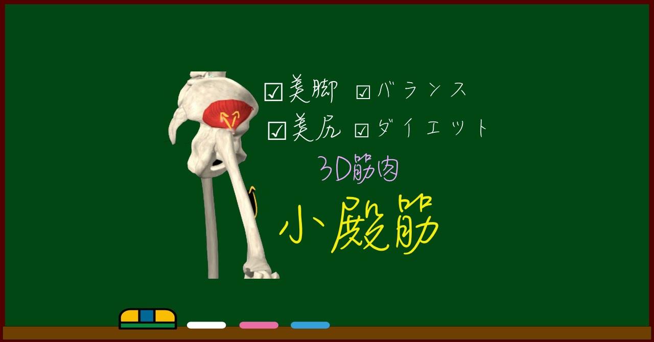 小殿筋【3D筋肉・解剖学】+お尻の筋肉まとめ