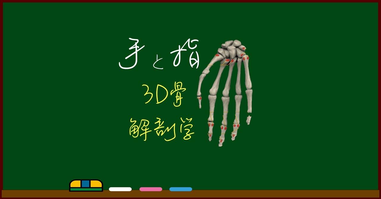 手根骨と手指骨【3D骨・解剖学】