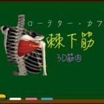 棘下筋【3D筋肉・解剖学】