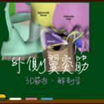 外側翼突筋【3D筋肉・解剖学】