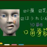 口角挙筋【3D筋肉・解剖学】