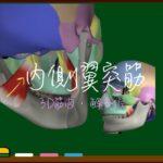 内側翼突筋【3D筋肉・解剖学】