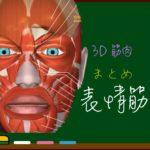 表情筋まとめ【3D筋肉・解剖学】 老け顔防止対策