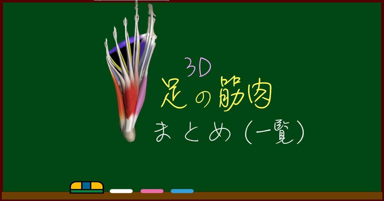 足の筋肉 まとめ(一覧)【3D筋肉・解剖学】