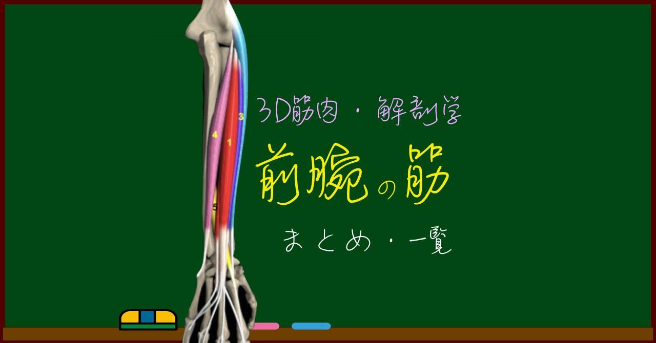 前腕の筋肉 まとめ(一覧)【3D筋肉・解剖学】