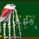手の筋肉 まとめ(一覧)【3D筋肉・解剖学】