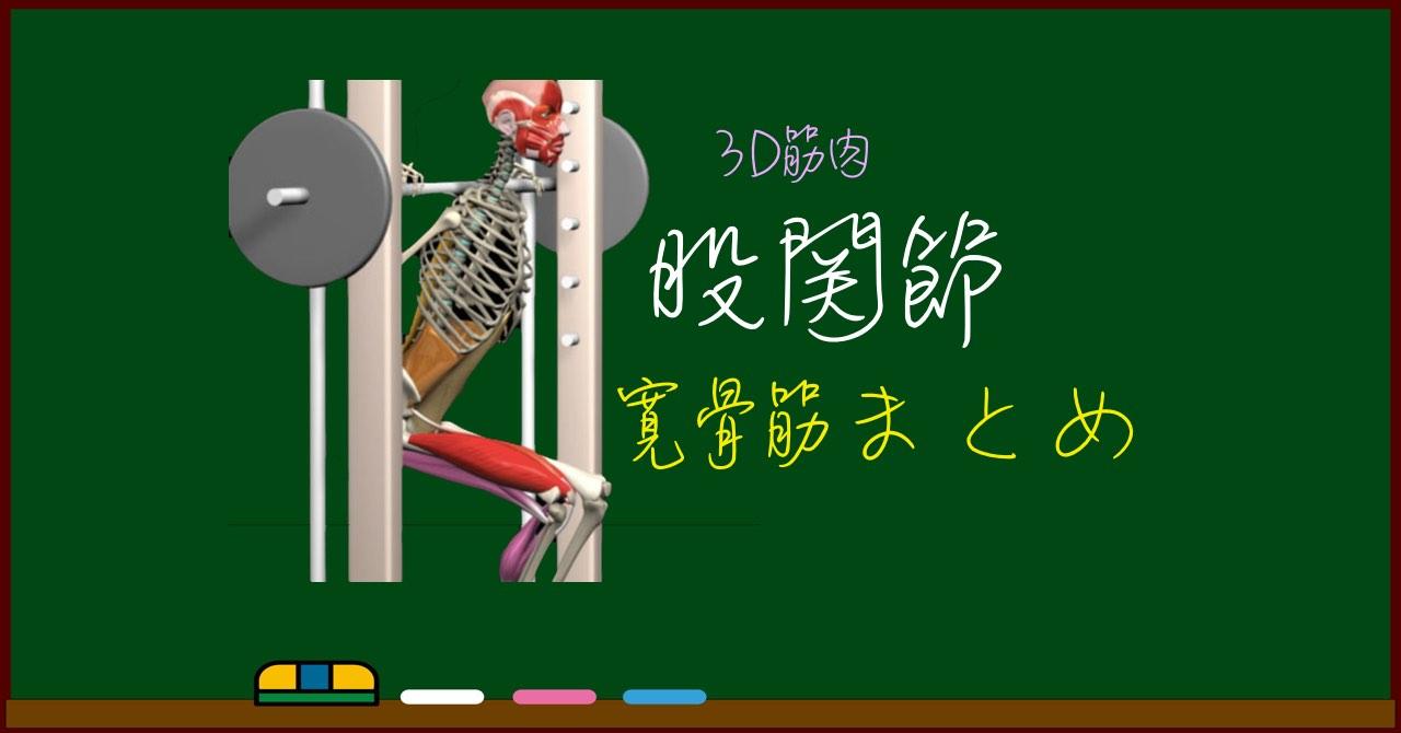 股関節の筋肉(寛骨筋) まとめ(一覧)【3D筋肉・解剖学】