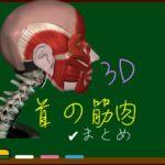 頸部筋まとめ(一覧)【3D筋肉・解剖学】