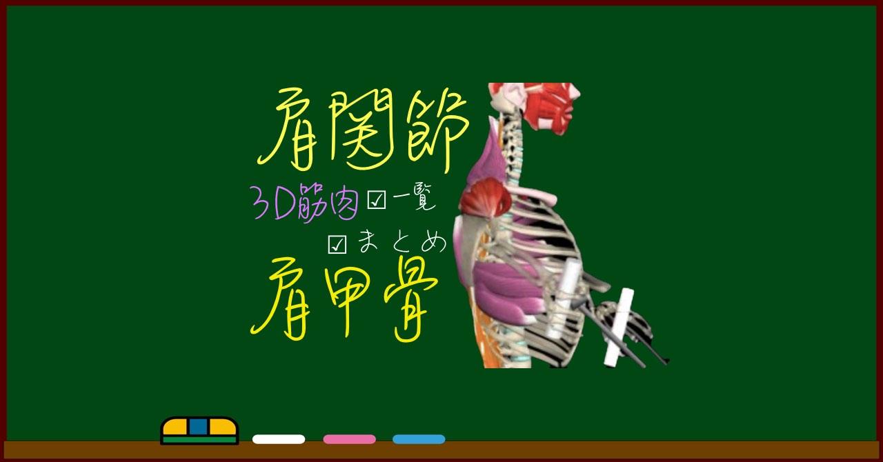 肩・上肢帯・肩甲骨周囲 筋肉まとめ【3D筋肉・解剖学】