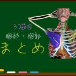 胸部(胸郭)・呼吸の筋肉 まとめ【3D筋肉・解剖学】