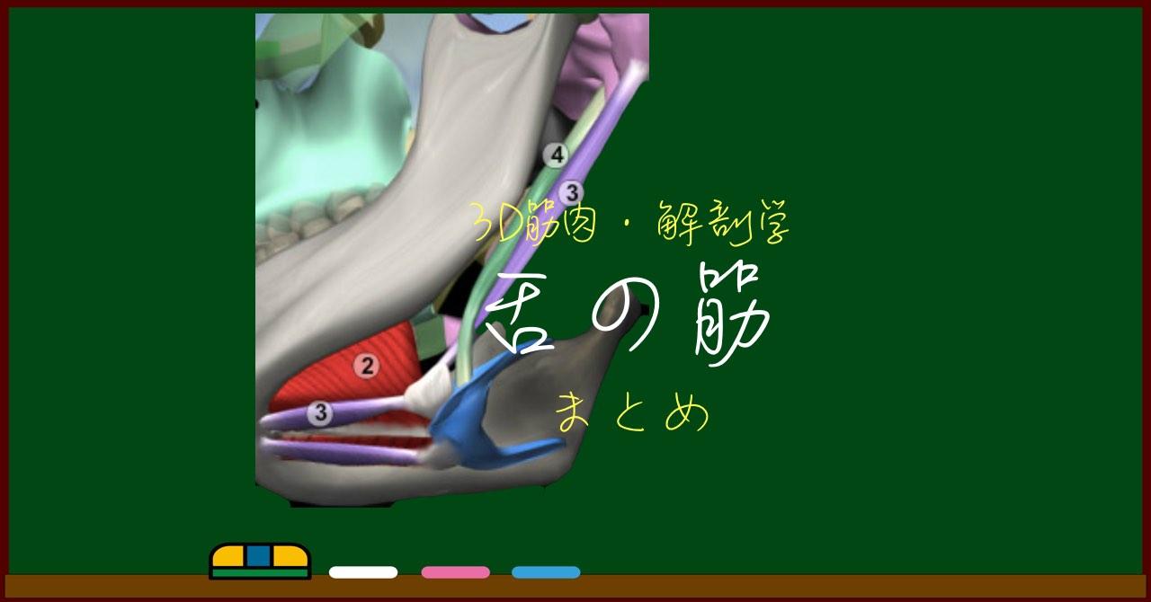 舌の筋肉 まとめ(一覧)【3D筋肉・解剖学】