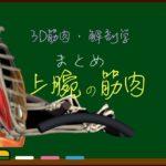 上腕の筋肉 まとめ(一覧)【3D筋肉・解剖学】