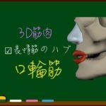 口輪筋【3D筋肉・解剖学】