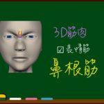 鼻根筋【3D筋肉・解剖学】