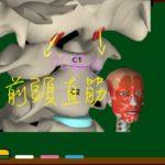 前頭直筋【3D筋肉・解剖学】