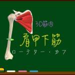 肩甲下筋【3D筋肉・解剖学】