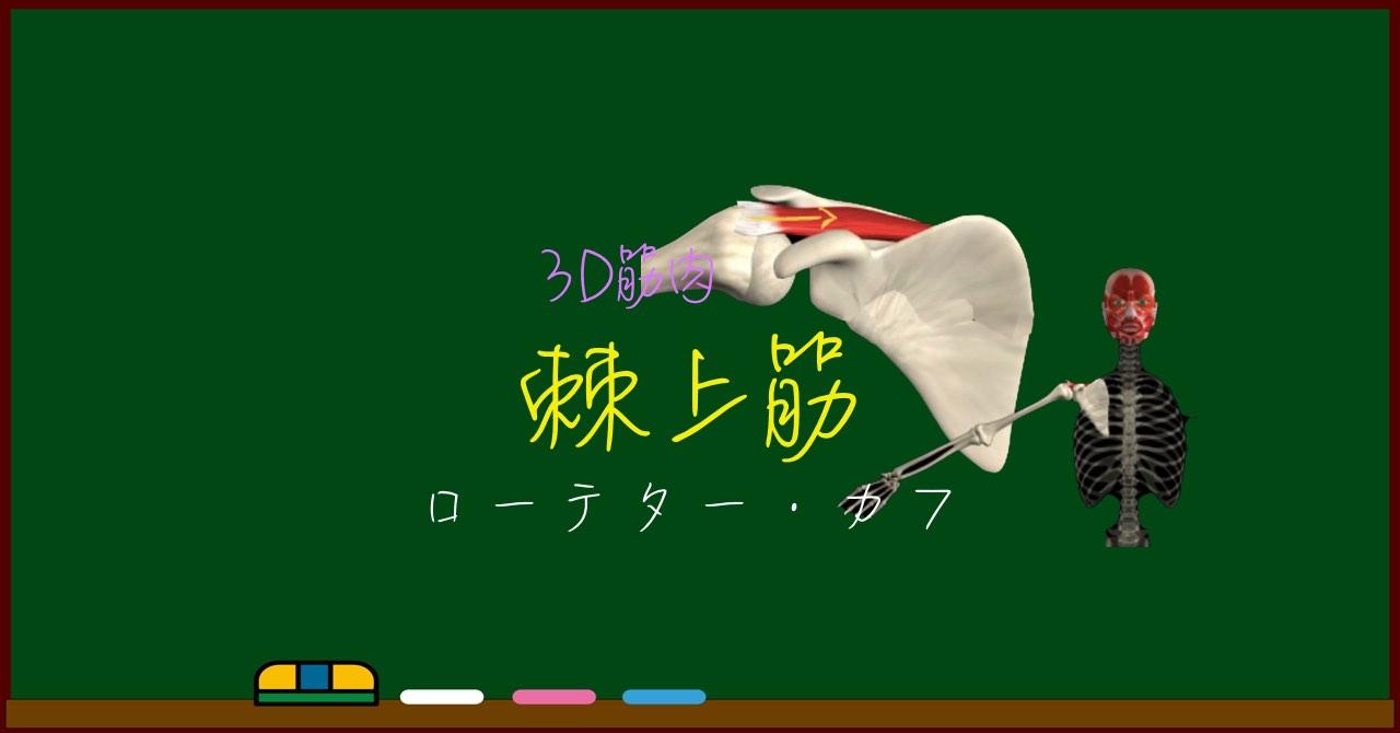 棘上筋【3D筋肉・解剖学】
