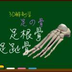 足根骨・足趾骨【3D骨・解剖学】
