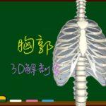 胸郭(肋骨・胸骨・胸椎)【3D骨・解剖学】