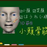 小頬骨筋【3D筋肉・解剖学】