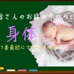 お母さんのお腹の中で赤ちゃんができる過程から理解する人体の構造
