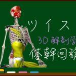 正しいツイストで理想のくびれ!【3D 解剖学・運動学】