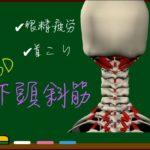 下頭斜筋(後頭下筋群)【3D筋肉・解剖学】