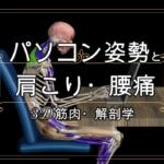 パソコン姿勢を評価!肩こり・腰痛・首こり解消【3D解剖学・運動学】