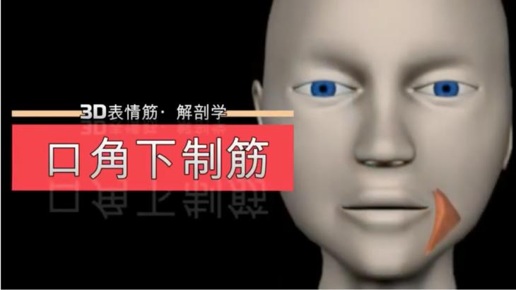 口角下制筋【3D筋肉・解剖学】
