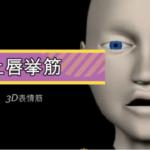 上唇挙筋【3D筋肉・解剖学】