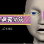 上唇鼻翼挙筋【3D筋肉・解剖学】