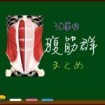 腹筋 まとめ(一覧)【3D筋肉・解剖学】