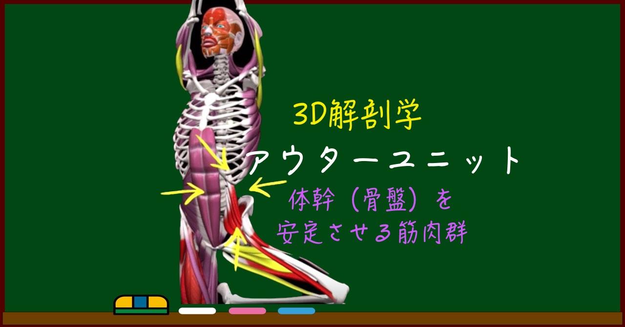 アウターユニットとは【3D筋肉・解剖学】体幹強化の必須知識