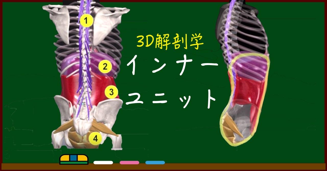 インナーユニットとは【3D筋肉・解剖学】体幹強化の必須知識