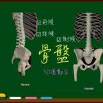 骨盤の運動方向【3D運動学】