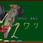 正しいスクワットを3D解剖学&運動学で理解