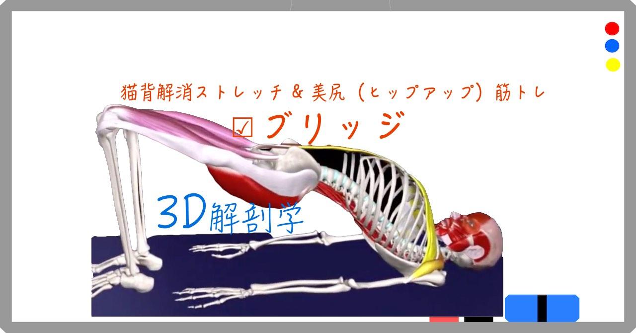 【ブリッジ】〜猫背解消ストレッチ& 美尻筋トレ〜