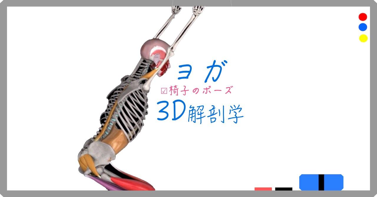 椅子のポーズ (Chair Pose) ウットカタ・アーサナ (utkatasana)【ヨガの3D解剖学】