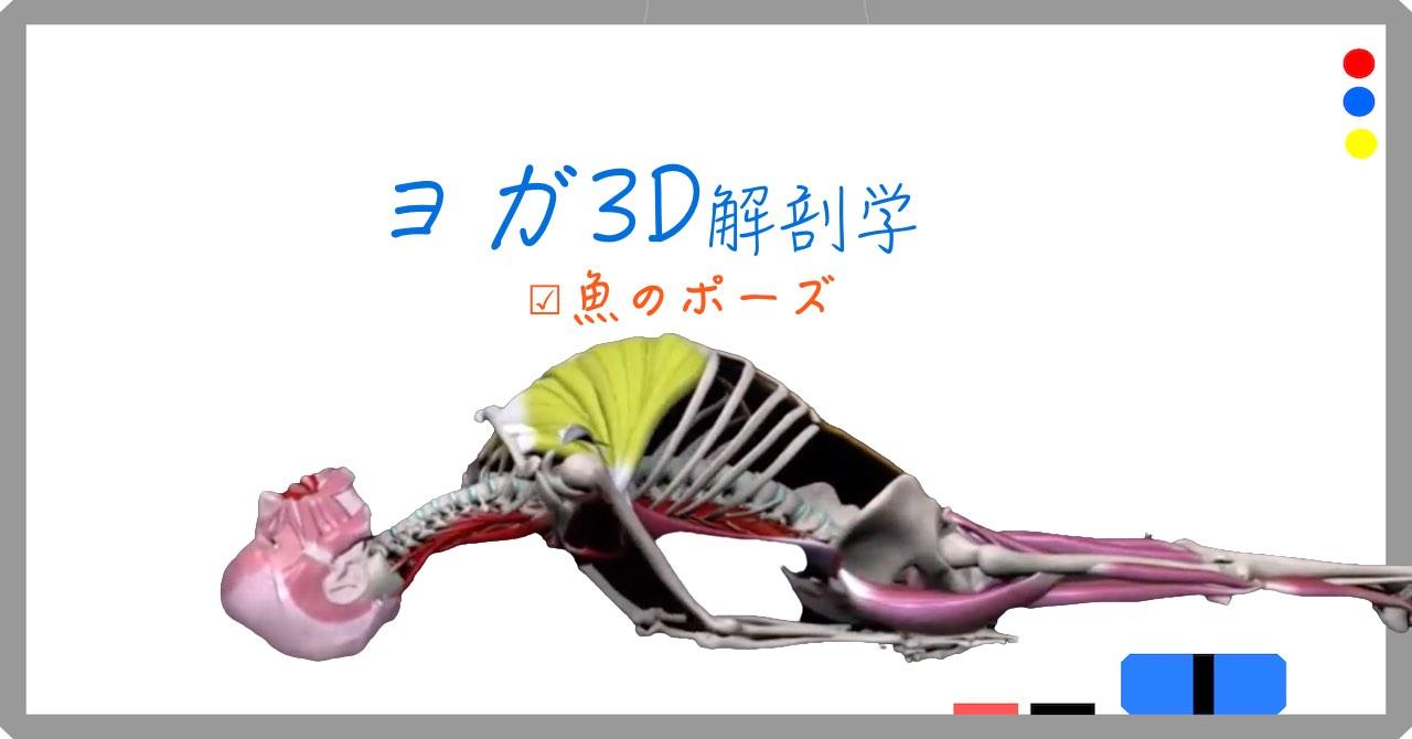 魚のポーズ (Fish pose)マッツヤ・アーサナ (Matsyasana)【ヨガの3D解剖学】