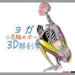 花輪のポーズ (Garland Pose) マラーサナ  (Malasana)【ヨガの3D解剖学】