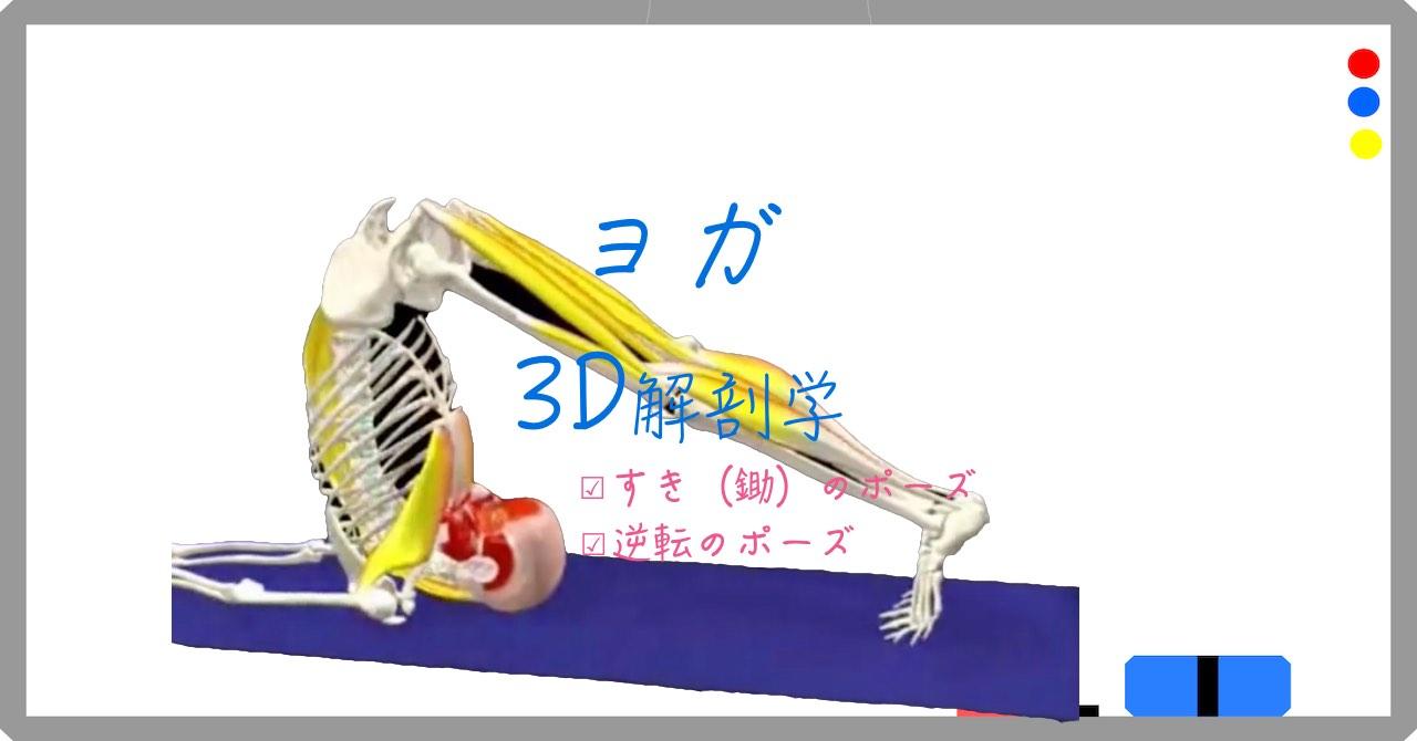 鋤(すき)のポーズ(PlowPose) ハラ・アーサナ (Halasana)【ヨガの3D解剖学】逆転のポーズ