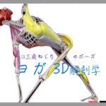 三角ねじりのポーズ(Revolved Triangle Pose) パリヴリッタ・トゥリコーナ・アーサナ(Parivrtta Trikonaasana)【ヨガの3D解剖学】