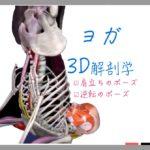 肩立ちのポーズ(Shoulder Stand) サーランバ・サルヴァンガーサナ (Salamba Sarvang asana) 【ヨガの3D解剖学】逆転ポーズ