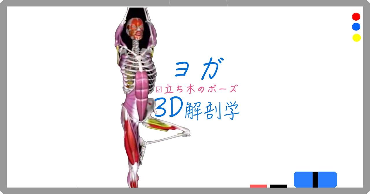 立ち木のポーズ(Tree Pose)ヴリクシャ・アーサナ(Vrksaasana)【ヨガの3D解剖学】