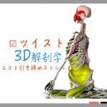 ツイスト〜筋肉の動きを3D動画で理解〜 【ストレッチの解剖学】