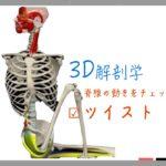 ツイスト〜脊椎(脊柱)の動きを3D動画で理解〜 【ストレッチの解剖学】