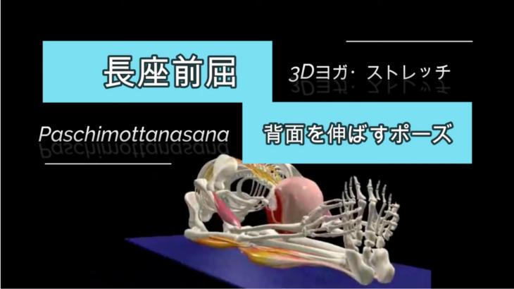 背面を伸ばすポーズ・長座前屈(Seated Forward Bend)パスチモッターナ・アーサナ (Paschimottanasana)【3D解剖学】